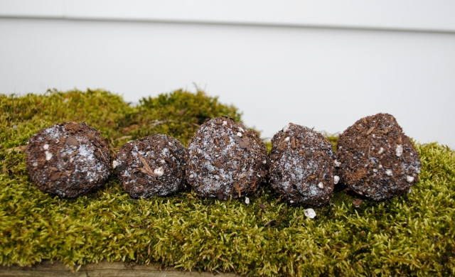 seed bombs moss table